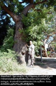 Neem-tree-220-years-old-3